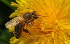 Więcej o: Światowy Dzień Pszczół