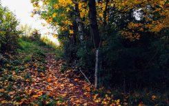 Więcej o: Taka jesień…