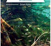 Więcej o: Dzień Ryby